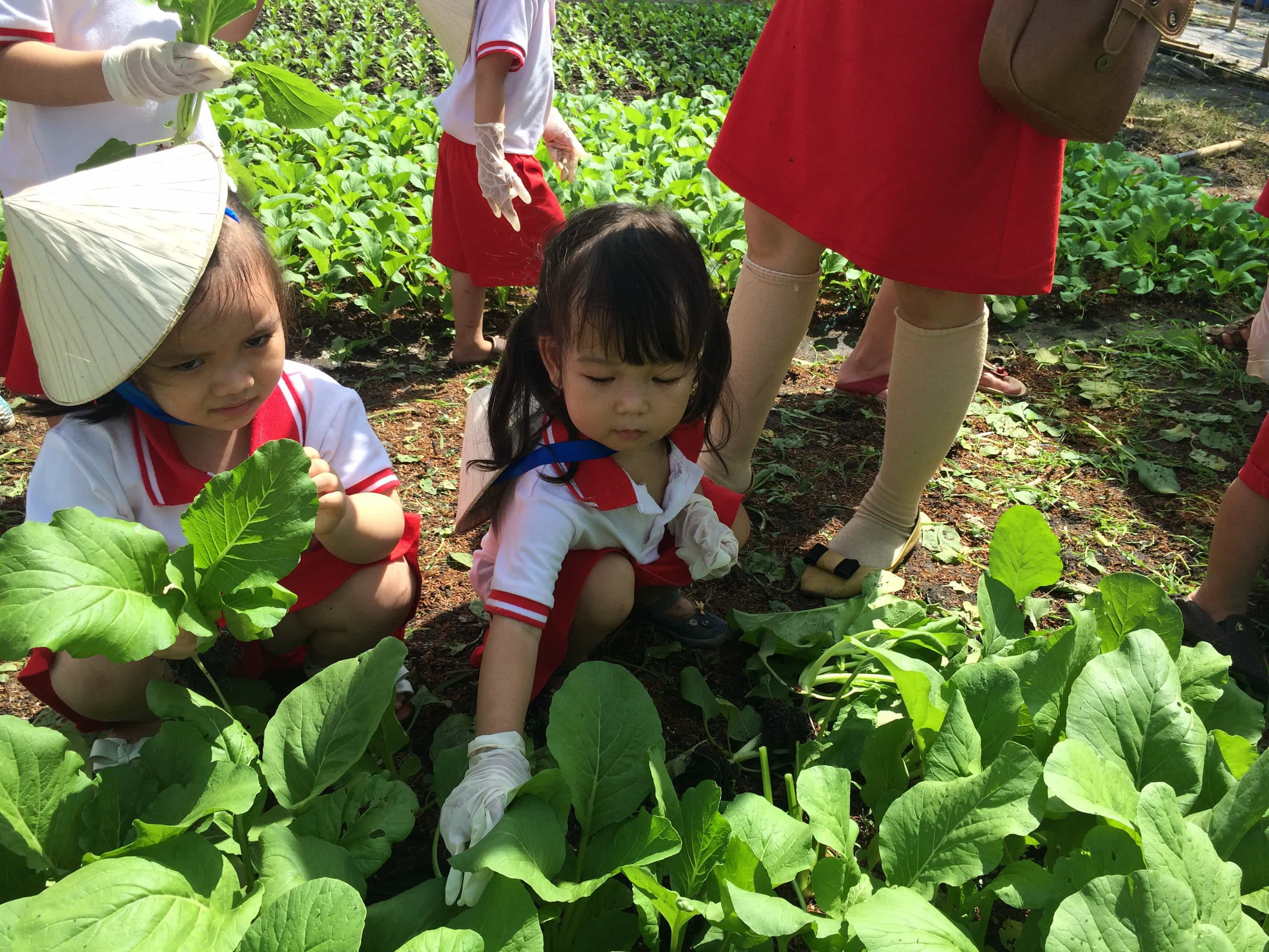 Chùm ảnh bé thăm vườn rau năm 2015